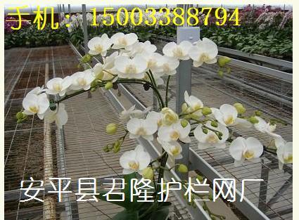 苗床网,温室苗床网,花卉苗床网,育苗网床,找苗床网