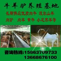 贺州有没有卖波尔山羊的养羊场/贺州种羊小羊羔价格