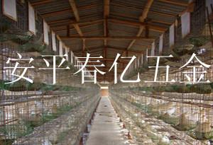 鸽笼、种鸽笼、肉鸽笼、青年鸽笼、产品信息