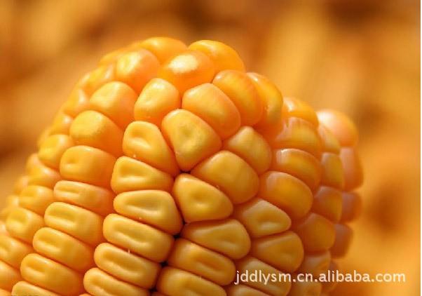 采购玉米、碎米、小麦、高粱、大豆