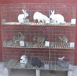 鸡鸽兔笼 鹌鹑笼 狐狸笼养殖笼宠物笼 仓储笼 周转箱 运输笼