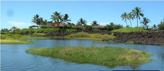 人工景观湖生态水处理