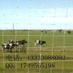 科林供应牛栏网|养殖围栏|铁丝网围栏|养殖用网
