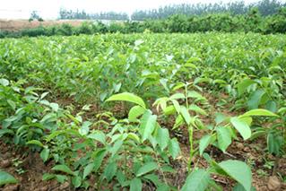 山西省绛县果树农业合作社的形象照片