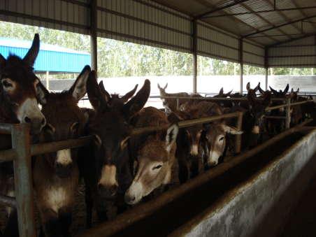 14号哪里适合养殖德州驴哪里的德州驴价格最低质量最好