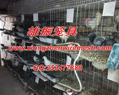 信鸽笼 养殖鸽子笼 肉鸽笼子 种鸽笼子