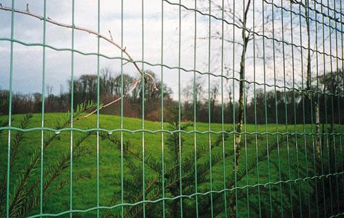 供给荷兰网护栏网www.hulanwang888.com