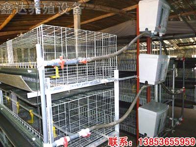 肉鸡笼养设备,笼养肉鸡设备,全自动肉鸡养殖设备-鑫达养殖设备公司
