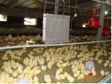 供应鸡舍温控设备鸡舍保温设备鸡舍加温设备