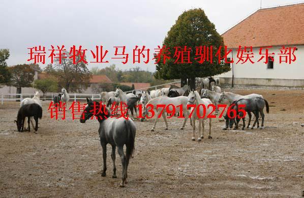 养马,养马技术,养马场,养马基地,马的养殖,马的价格,马的品种
