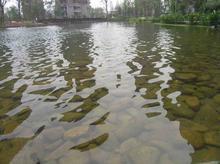 供应浙江杭州景观水处理、宁波景观水处理、温州景观水处理、绍兴景观