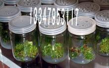 菌苗组培玻璃瓶价格