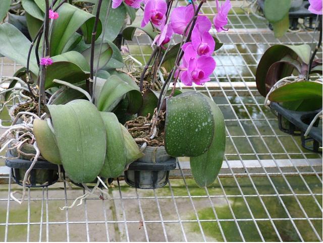 苗床网|花架网|养花网|镀锌网片