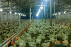 多款式养殖取暖设备-资质认证