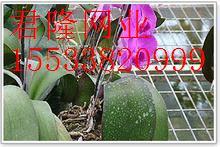 育苗网床-苗床网厂家-苗床网价格-苗床网规格