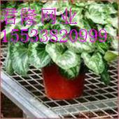 专业生产苗床网-温室苗床网-热镀锌苗床网-温室育苗养花网