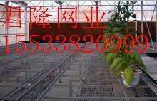 河北省安平县君隆护栏丝网厂的形象照片