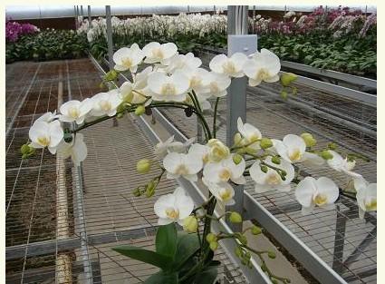 热镀锌温室大棚苗床花卉支架网片