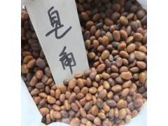 供应皂角苗 3-15公分皂角树 皂角种子