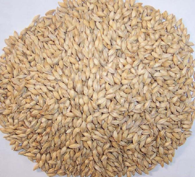 厂家专业生产供应麦芽比例提取物10:1