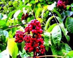 医药中间体|植物提取物|医药原材料 南京景竹