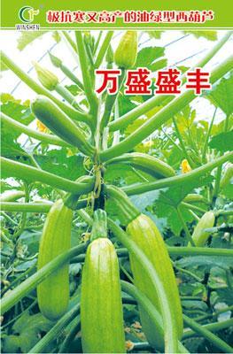 杂交一代耐高温西葫芦种子,万盛种业,越冬西葫芦种子低价批发