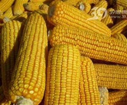现款长期求购玉米棉粕3100吨