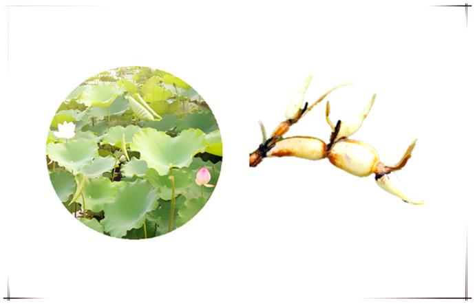 莲藕淀粉设备-打造一流的莲藕淀粉生产流水线