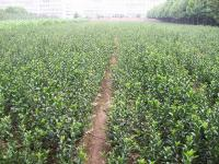 山西绛县通达种苗繁育责任有限公司的形象照片