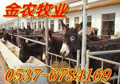 玉林肉牛养殖场黄牛价格育肥牛价格牛犊价格肉牛养殖场