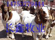 山东长鑫牧业牛羊养殖基地
