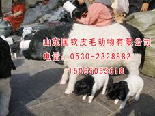 仿真猪模型仿真龙大型雕塑动物专业供应