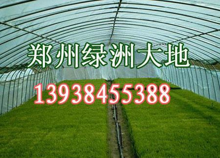 温室大棚支架机,蔬菜大棚支架,郑州绿洲