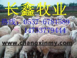 供应小尾寒羊价格(现有大批,新出栏牛羊驴品种,急需销售,