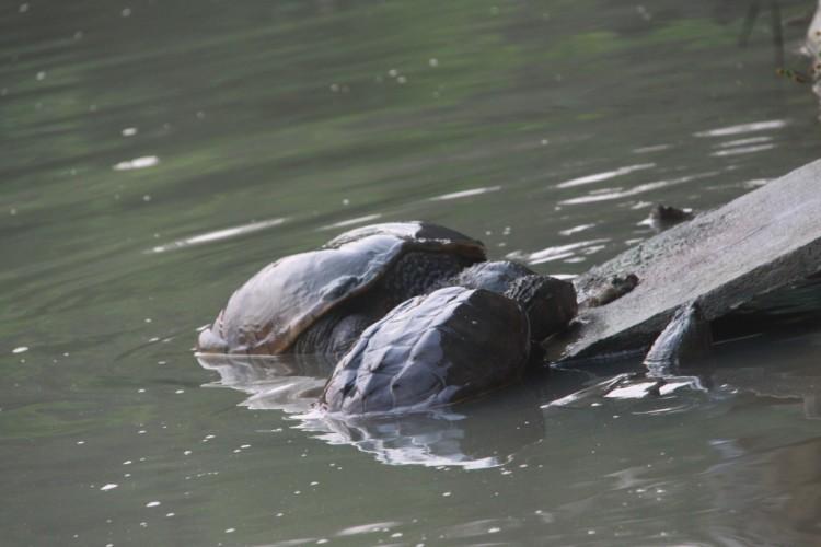 佛鳄龟不吃东西怎么办?