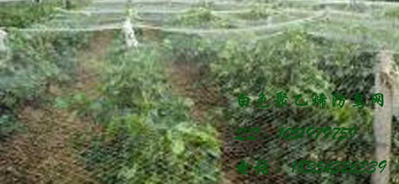 大量供应葡萄园防鸟网