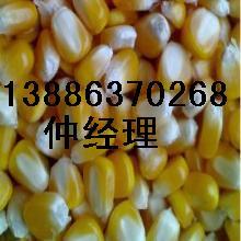 采购:玉米,大豆,绿豆,棉粕,大麦,大米,碎米