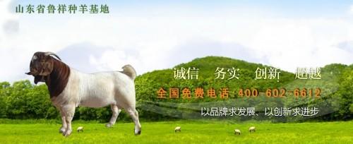 山东小尾寒羊养殖基地,小尾寒羊的价格