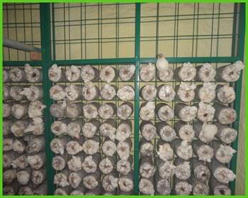 蘑菇养殖网片 养殖蘑菇用网片 专业蘑菇网片厂家