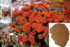 供应植物提取物红景天甙3%