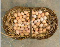 供应散养土鸡蛋
