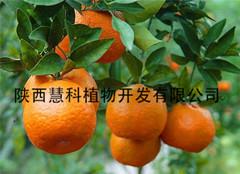 厂家供应优质98%桔皮素