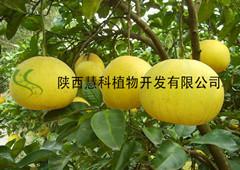 陕西慧科提供优质98%柚皮素