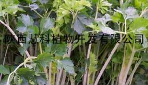 陕西慧科优势产品芹菜素