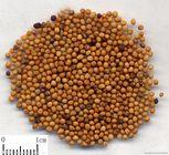 芹菜籽提取物