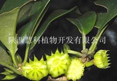 陕西慧科长期供应优质莽草酸