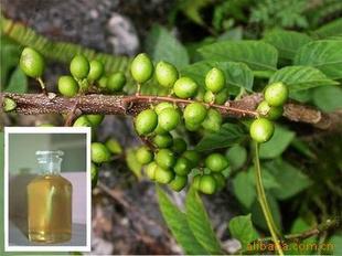 天竺葵和玫瑰香叶提取物——香叶油