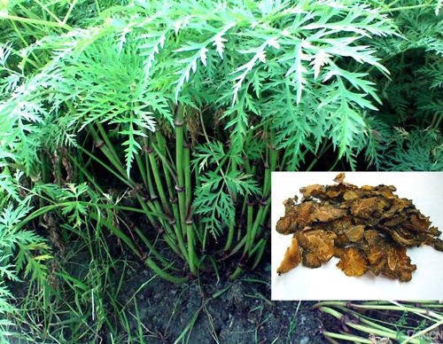 吉安市中香天然植物有限公司的形象照片