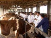 肉牛价格_肉牛养殖基地_波尔山羊养殖基地