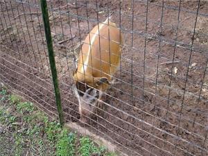 新洲养殖专用围栏网护栏网价格